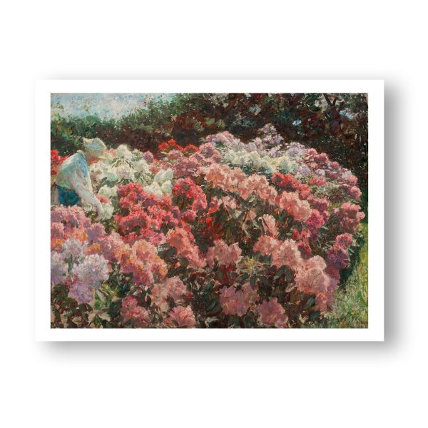 Rhododendron i Dagminnes have
