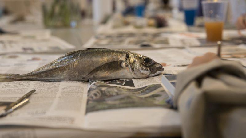Friske fisk som motiv i malerskole for børn