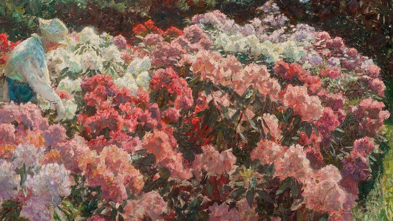 Laurits Tuxen: Rhododendron in Tuxen's garden. 1917